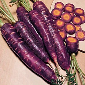 carota-nera-300.jpg